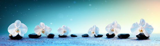 Orchids In Row On Spa Stones. In Fresh Background stock images