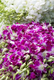 Orchids. For sale, street vendor Stock Photography