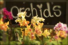 Orchids for Sale Royalty Free Stock Image