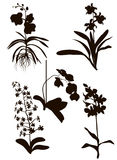Orchids Silhouette Royalty Free Stock Photography