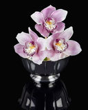 Orchids in a Silver Bowl Royalty Free Stock Image