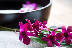 Orchids in spa setting Royalty Free Stock Image