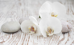 Orchids spa Royalty Free Stock Photography