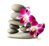 Orchids on stacked stones Royalty Free Stock Photos