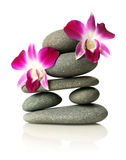 Orchids on stacked stones Stock Photos