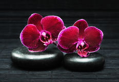 Orchids and stones. Spa concept. Flowers of orchid and stones Stock Photography