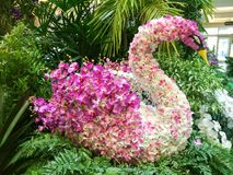 Orchids. Swan made of orchids Royalty Free Stock Images