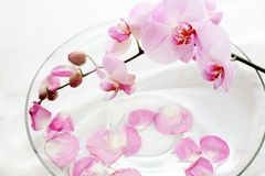 Orchids therapy royalty free stock image