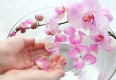 Orchids therapy stock photos