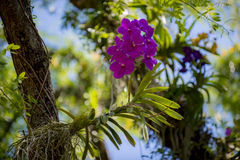 Orchids in tree Royalty Free Stock Photo