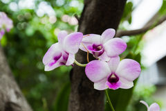 Orchids on the tree. Orchids on tree in the garden Royalty Free Stock Images