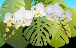 Orchids and tropic leaves, summer nature flowers royalty free illustration