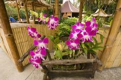orchids tropiska thailand Royaltyfri Fotografi