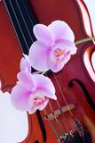 Orchids twig and violin Stock Photos
