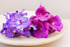 Orchids vanda on wooden plate. Orchids vanda purple and pink on wooden plate t Stock Photos