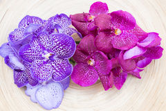 Orchids vanda on wooden plate top view. Orchids vanda purple and pink on wooden plate top view Stock Images