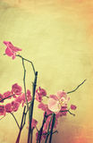 Orchids on vintage background Stock Photo