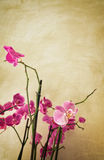 Orchids on vintage background Stock Photography