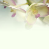 orchids in vintage color style on mulberry paper texture  Royalty Free Stock Image