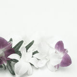 Orchids in vintage color style on mulberry paper texture Royalty Free Stock Photos