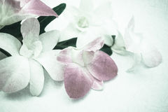 Orchids in vintage color style on mulberry paper texture Stock Images