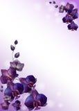 Orchids on violet background. Frame of watercolor violet orchids on violet background Stock Photo