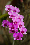 Orchids violet beautiful bouquet. In a garden Royalty Free Stock Photo