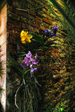 Orchids on a Wall in a Greenhouse Royalty Free Stock Photography