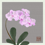 Orchids watercolor. Lilac orchids watercolor likewise japanese painting royalty free stock photos