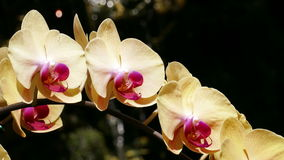 Orchids waterfall drops background 4k stock footage