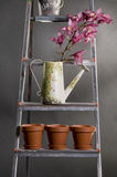 Orchids in watering can  on a metal stepladder Stock Photography