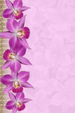 Orchids wedding background Stock Photos