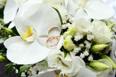 Orchids and wedding rings Royalty Free Stock Photo