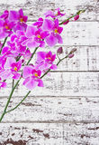 Orchids on white wood Royalty Free Stock Photography