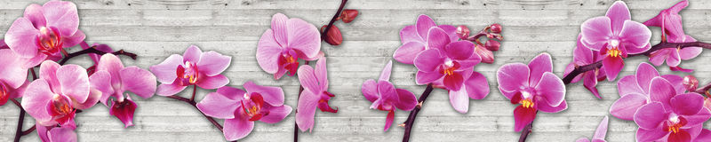Orchids on a wood background royalty free stock photography