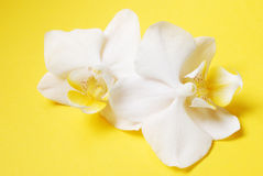 Orchids on yellow Royalty Free Stock Images