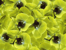Orchids yellow-gray-blue.  background of flowers orchids. Flower composition.  a collage of motley  flowers. Stock Photos