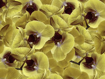 Orchids yellow-gray-violet.  background of flowers orchids. Flower composition.  a collage of motley  flowers. Nature Royalty Free Stock Photos