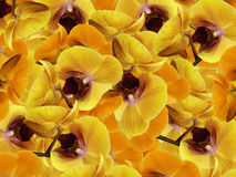Orchids yellow-orange-pink.  background of flowers orchids. Flower composition.  a collage of motley  flowers. Royalty Free Stock Image
