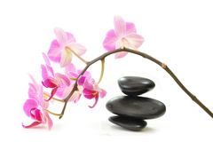 Orchids and zen Royalty Free Stock Image
