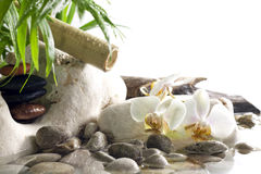 Orchids and zen stones on water spa concept Stock Photo