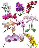Orchidsblommor isoleras det stock illustrationer