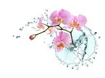 orchidvatten Royaltyfri Foto