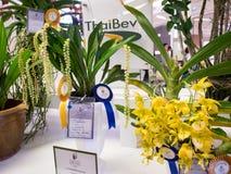 Orchild molto raro nelle orchidee 2014 di Bangkok del modello Immagini Stock Libere da Diritti