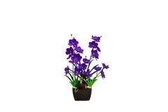 Orchird viola in vaso di legno Fotografie Stock