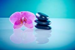 Orchis avec les pierres chaudes Images stock