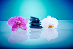 Orchis com pedras quentes Imagens de Stock Royalty Free