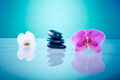 Orchis with hot stones. Wellness and Spa Image, works perfect for advertising Health and Beauty, Spirituality or Massage Royalty Free Stock Photos