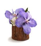 Orchis in vaso di legno fotografia stock