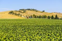 orcia Тоскана фермы d val Стоковая Фотография RF